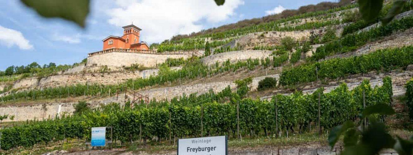4 Freyburger Schweigenberg_Mira Held